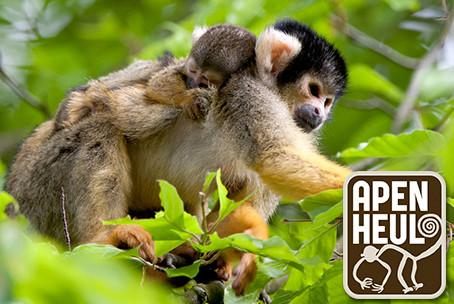 apen in de dierentuin