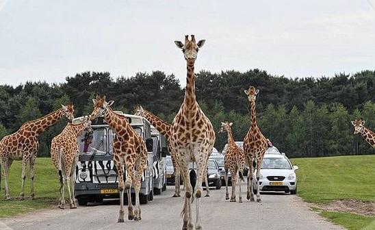 safaripark in Tilburg